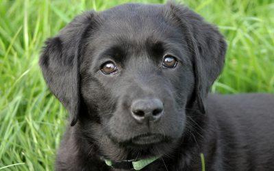 Pups voorzien van onderkomens!